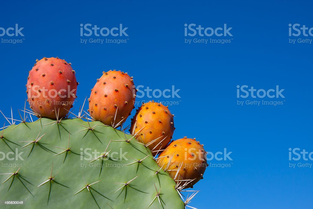 Cactus with fruits against a deep blue sky stock photo