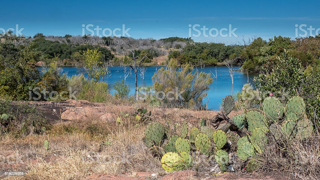 Cactus with Large Lake in the Background stock photo