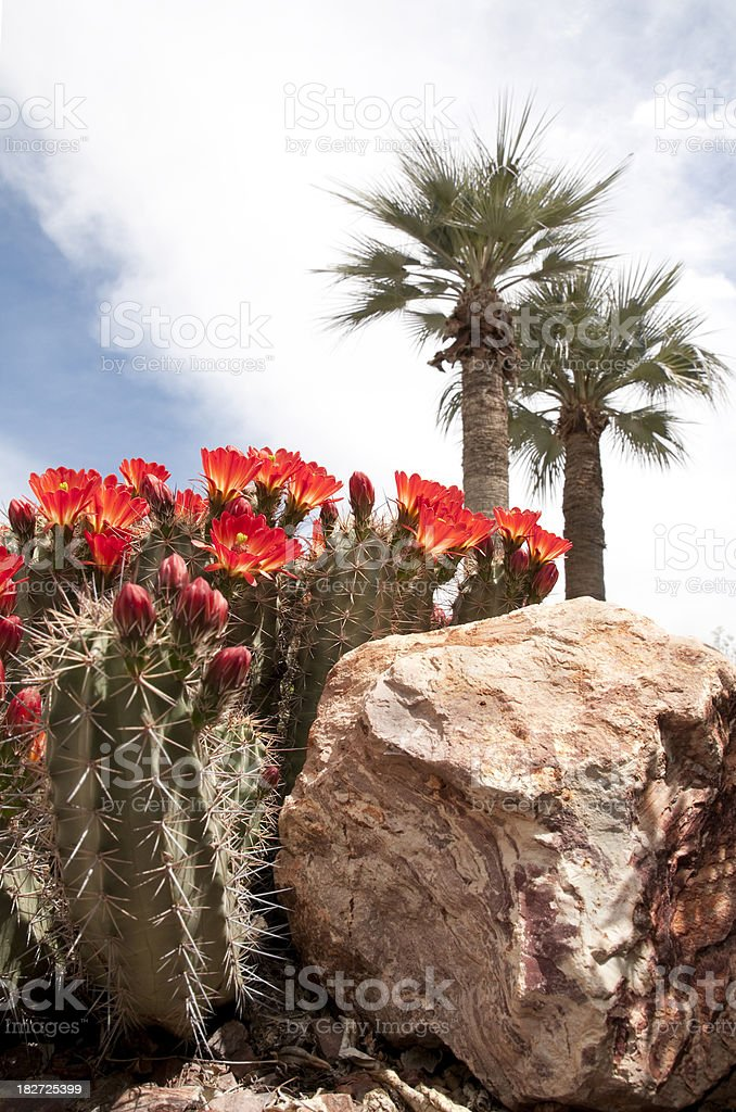 Cactus with Palms stock photo