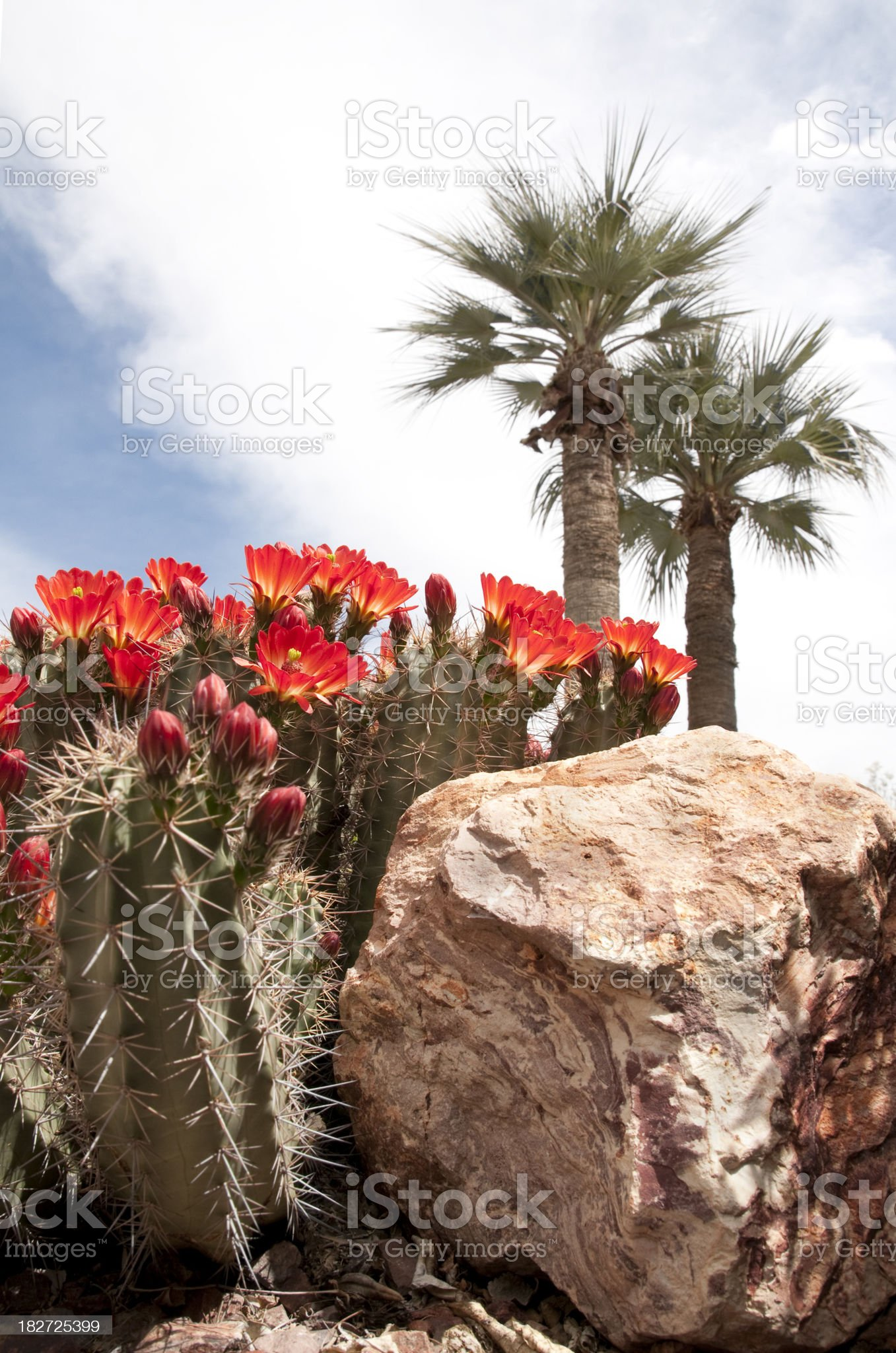 Cactus with Palms royalty-free stock photo