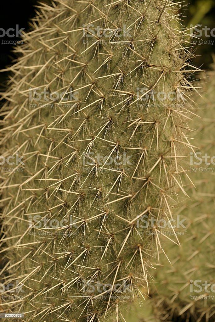 cactus03 royalty-free stock photo