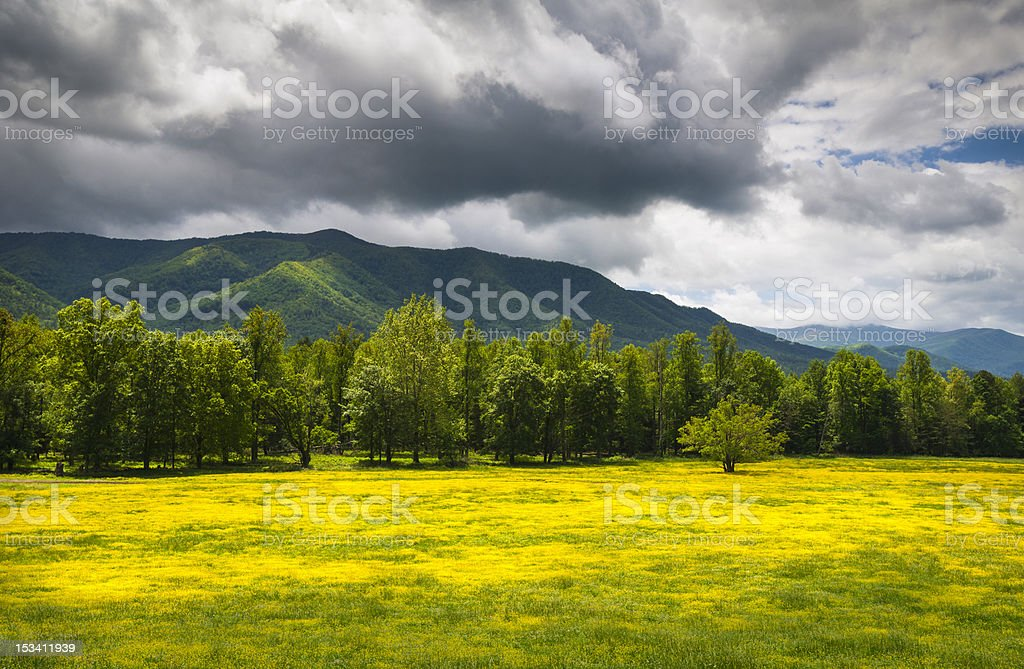 Cades Cove Spring Flowers Great Smoky Mountains National Park Fields royalty-free stock photo