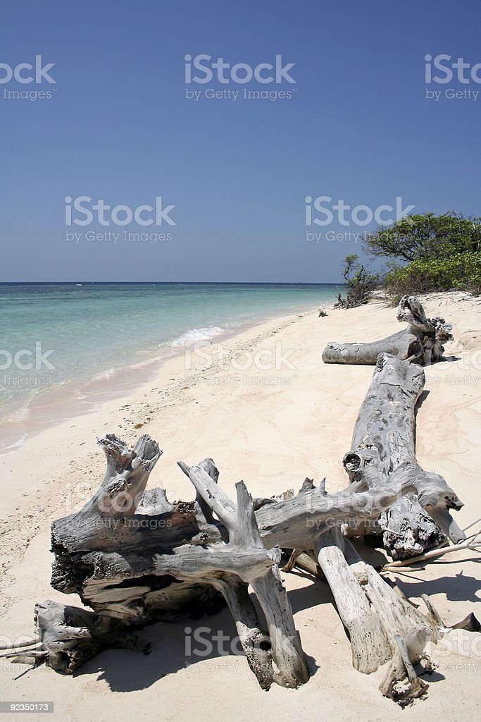 cagayan island beach driftwood philippines royalty-free stock photo