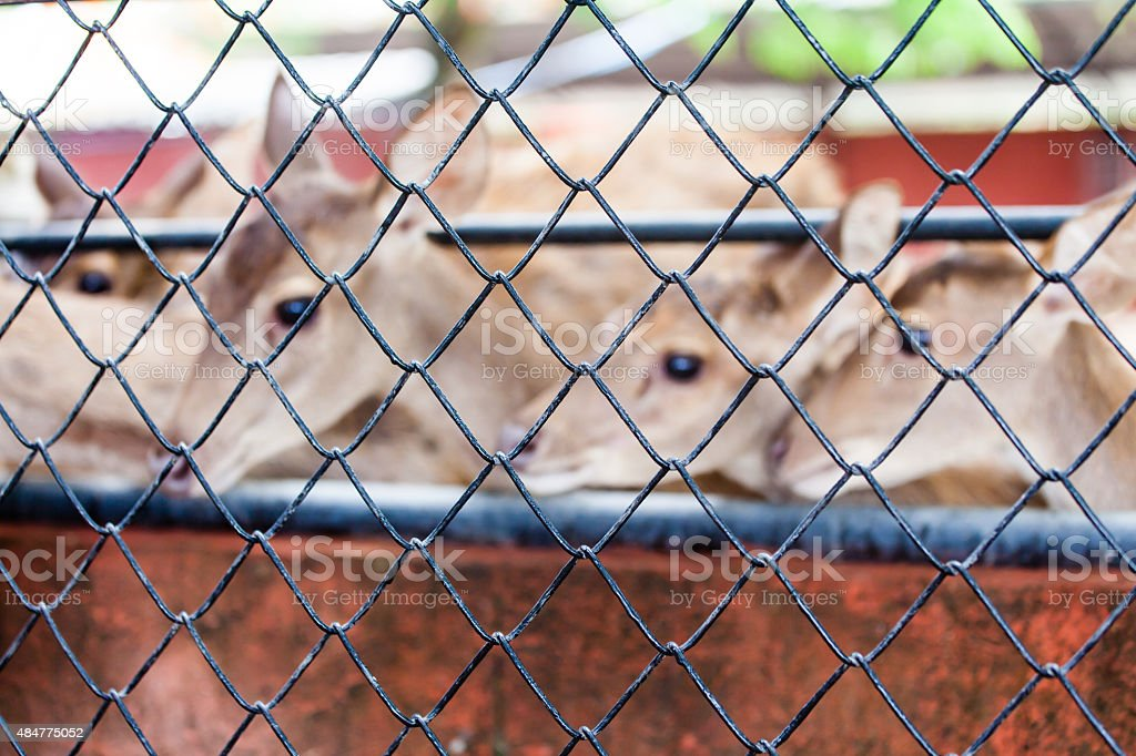 Cage and deer inside blur background stock photo