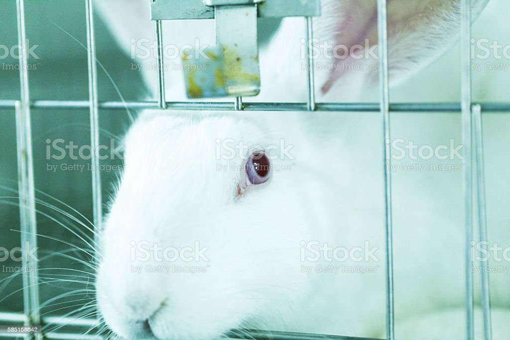 cage for rabbit in the lab stock photo