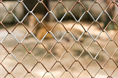 cage with tiger in the zoo