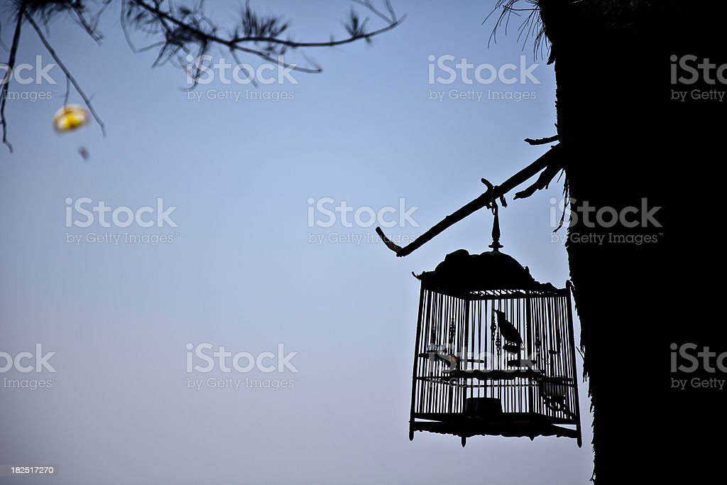 caged bird - Thailand royalty-free stock photo