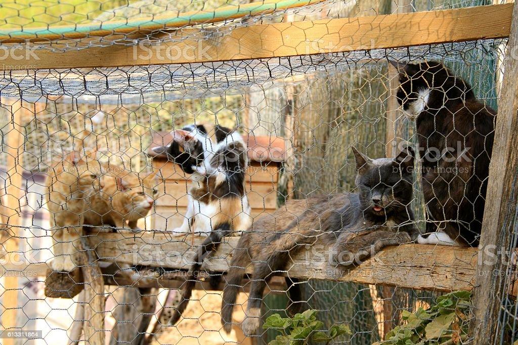 Caged Cats Locked Up stock photo