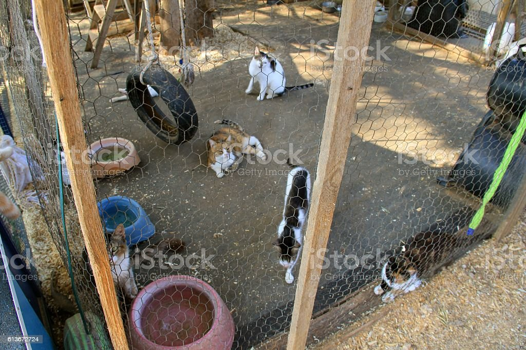 Caged Cats stock photo