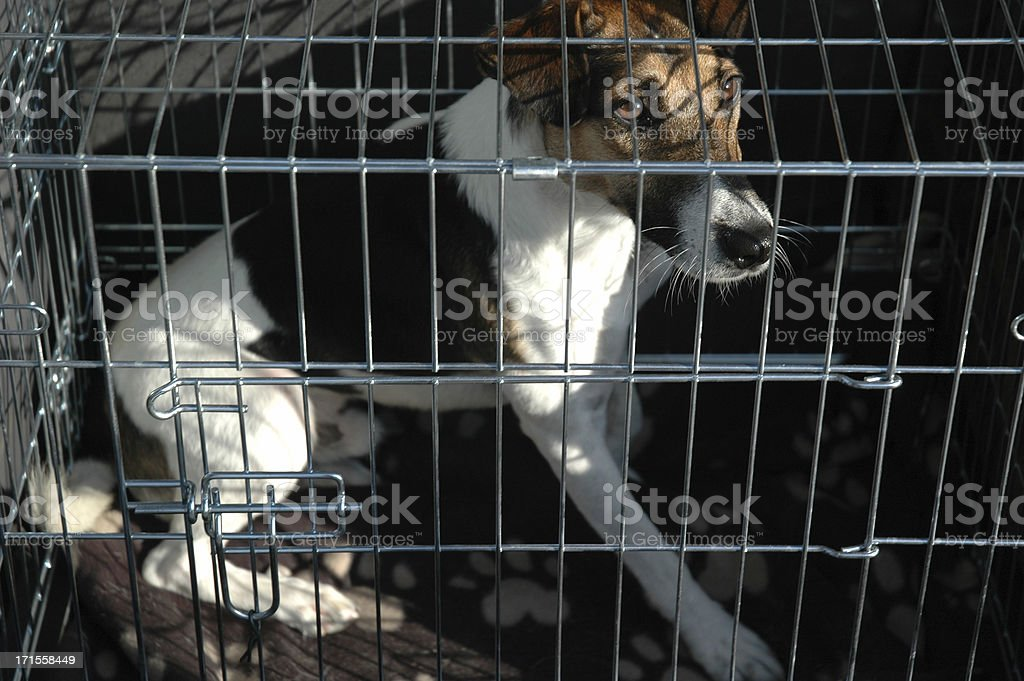 Caged dog stock photo