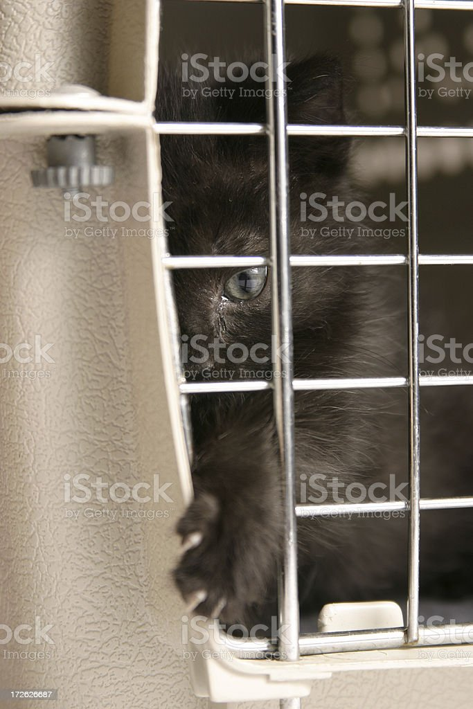 Caged royalty-free stock photo
