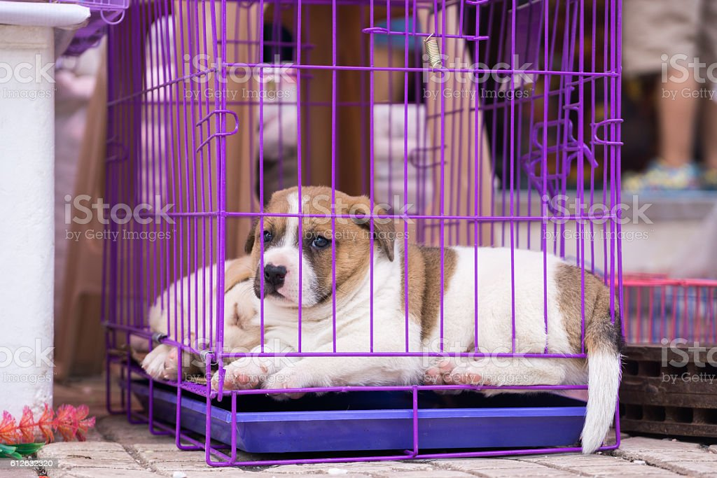 Caged puppy stock photo