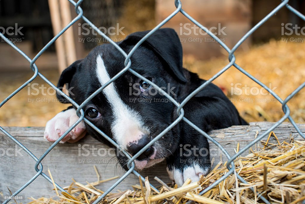 caged puppy waiting for adoption stock photo