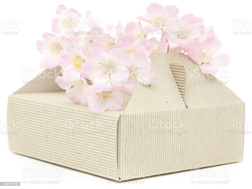 Cake box  with cherry blossom isolated royalty-free stock photo
