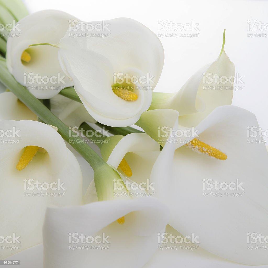 Cala Lily Bouquet stock photo