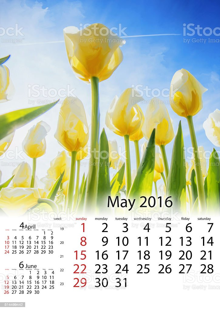 Calendar May 2016 - View of yellow tulip rows stock photo
