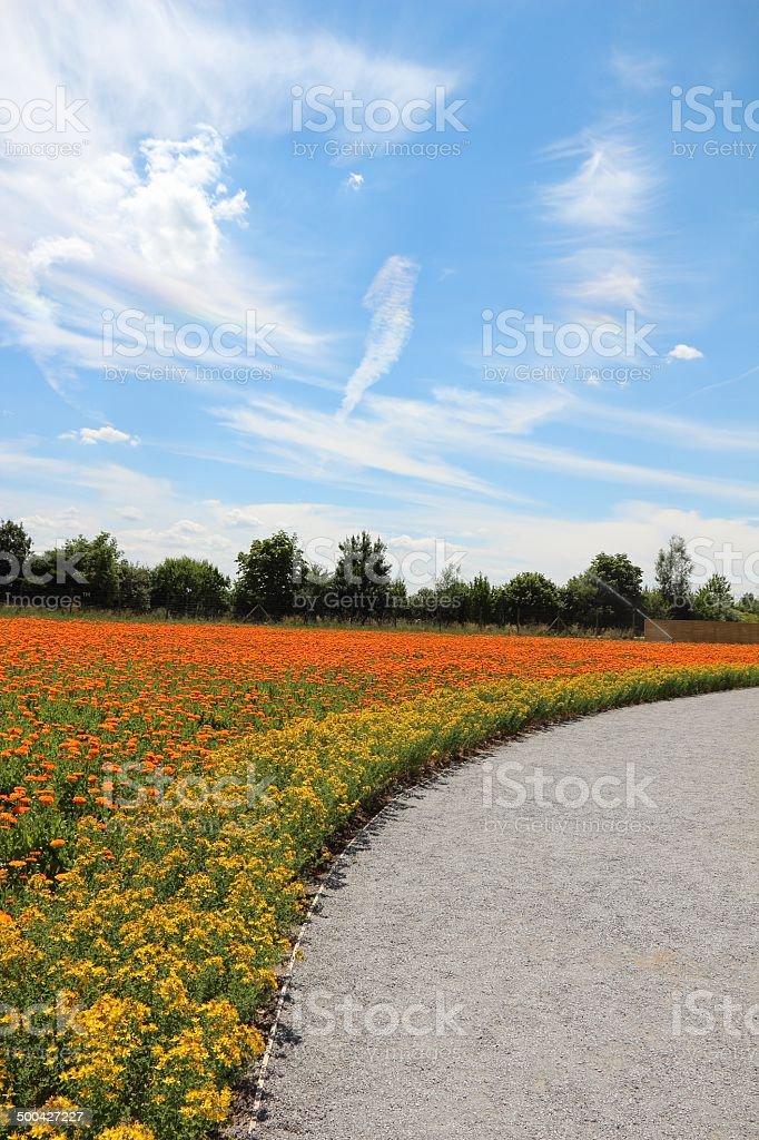 Calendula and hypericum perforatum flowers stock photo