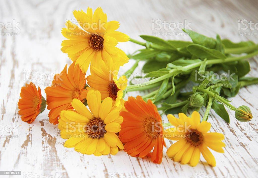 calendula bouquet royalty-free stock photo