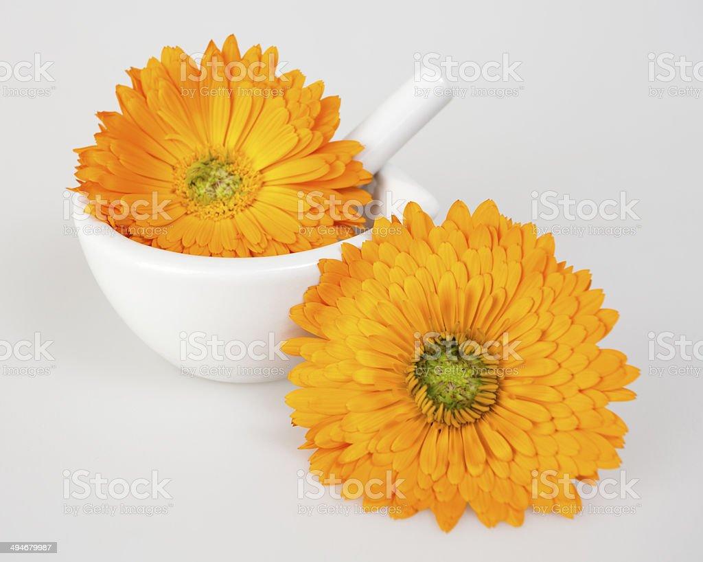 Calendula flowers on light background royalty-free stock photo