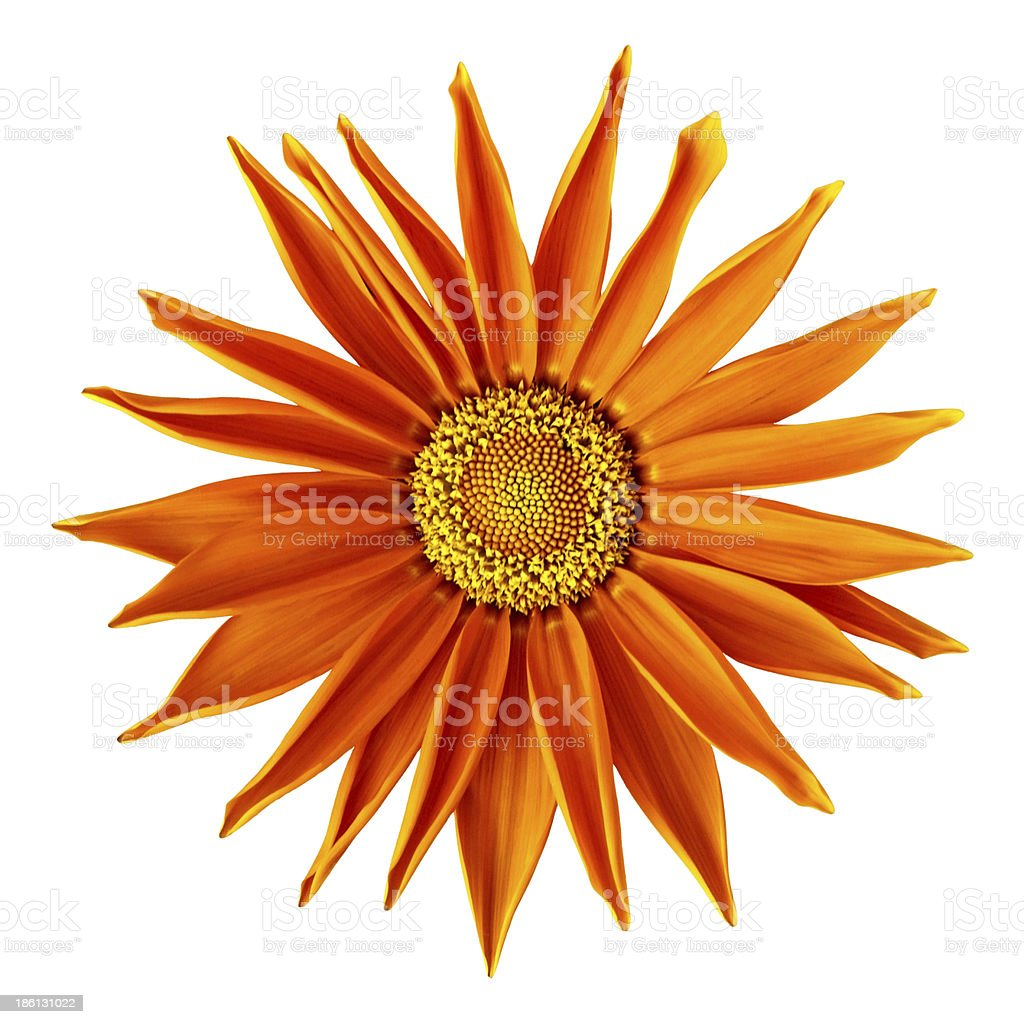 Calendula officinalis herbaceous perennial royalty-free stock photo