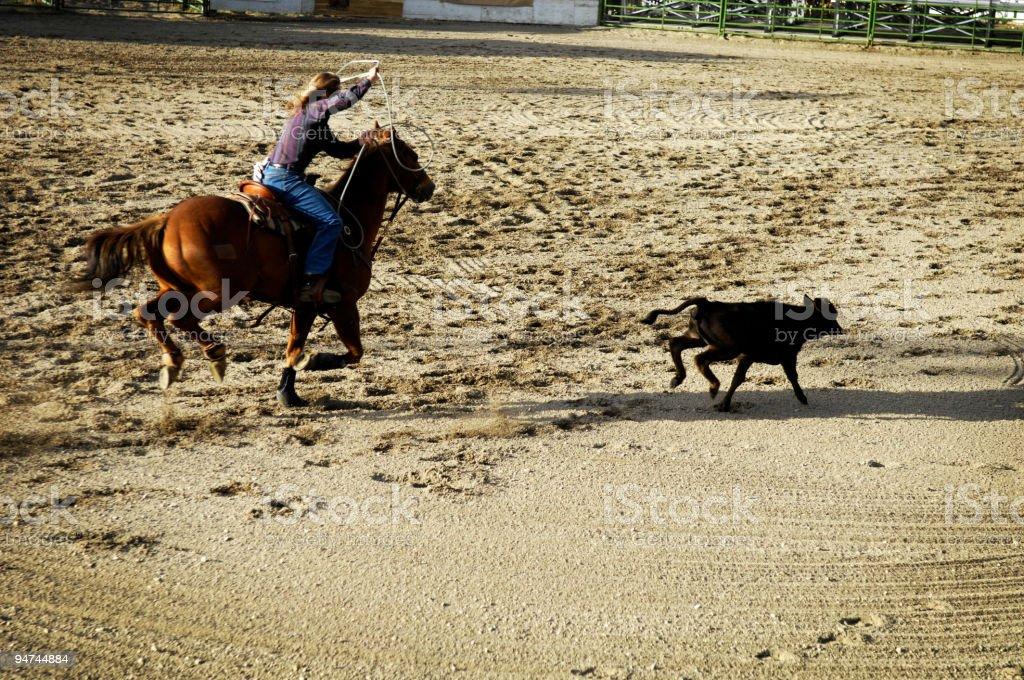 Calf Roping stock photo