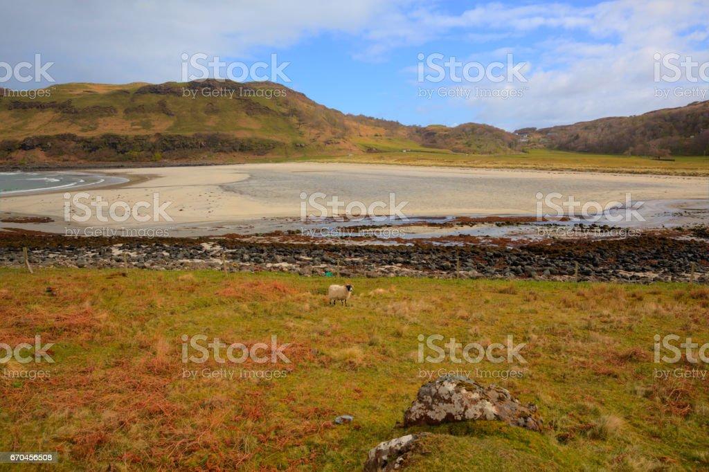 Calgary Bay Isle of Mull Scottish Inner Hebrides on a beautiful spring day stock photo