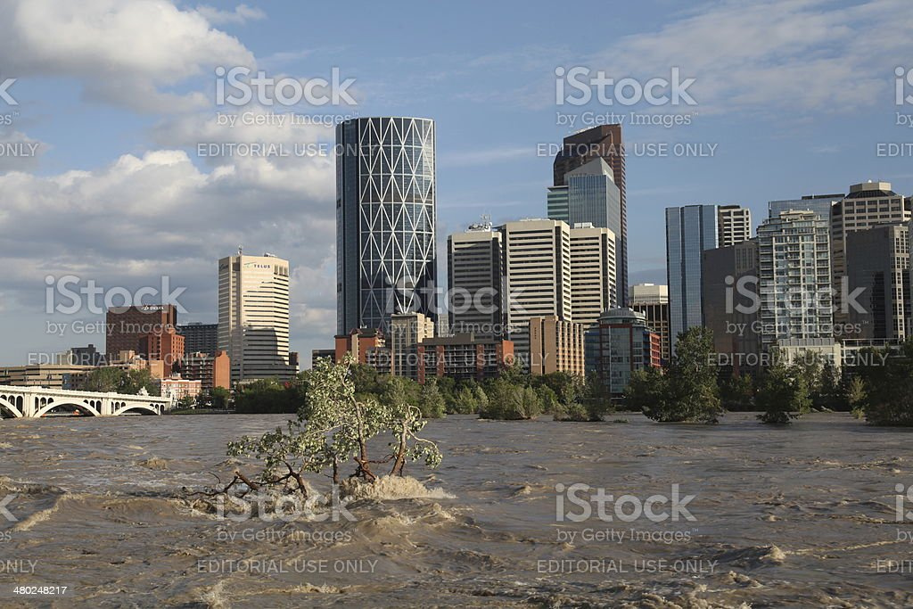 Calgary Flood - Stranded Trees royalty-free stock photo