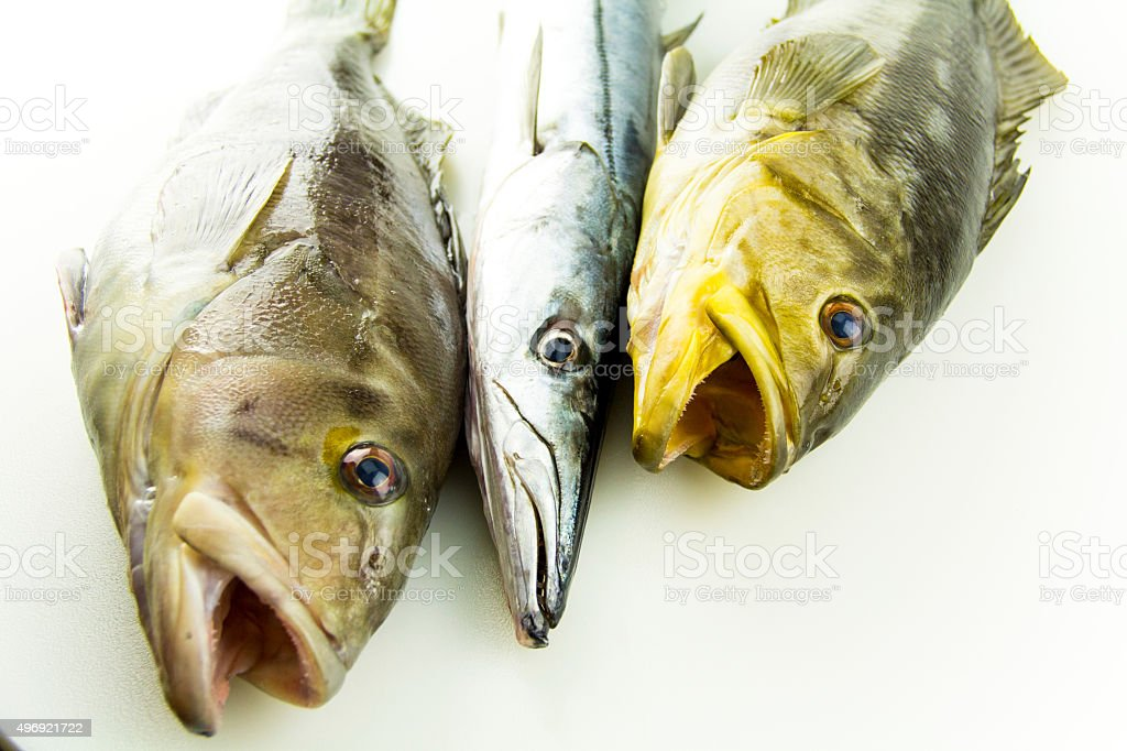 Calico Bass and Barracuda Fish stock photo