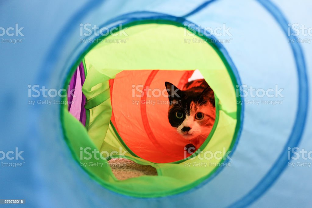 Calico cat in a tunnel stock photo