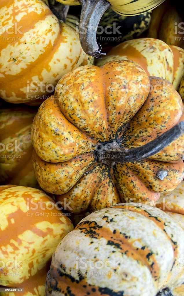 California Acorn squash stock photo