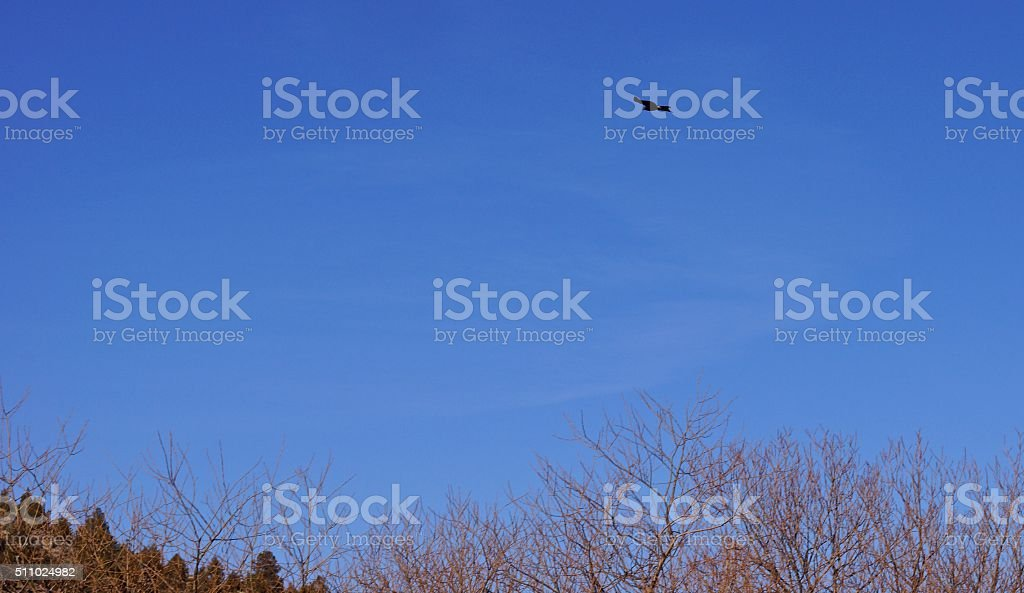 California Blackhawk Flight stock photo