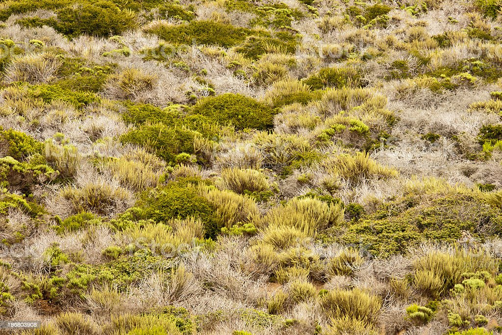California Central Coast: Chaparral in Bloom, midsummer, stock photo