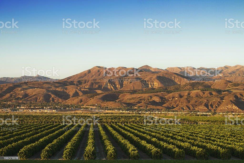 California Citrus Groves stock photo