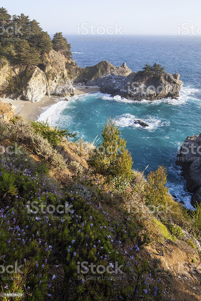 California coast in spring - Mcway falls with wild flowers royalty-free stock photo
