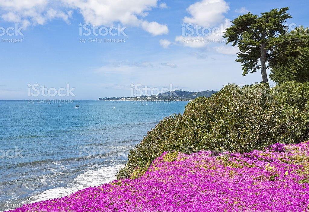 California Coastal Flowers stock photo