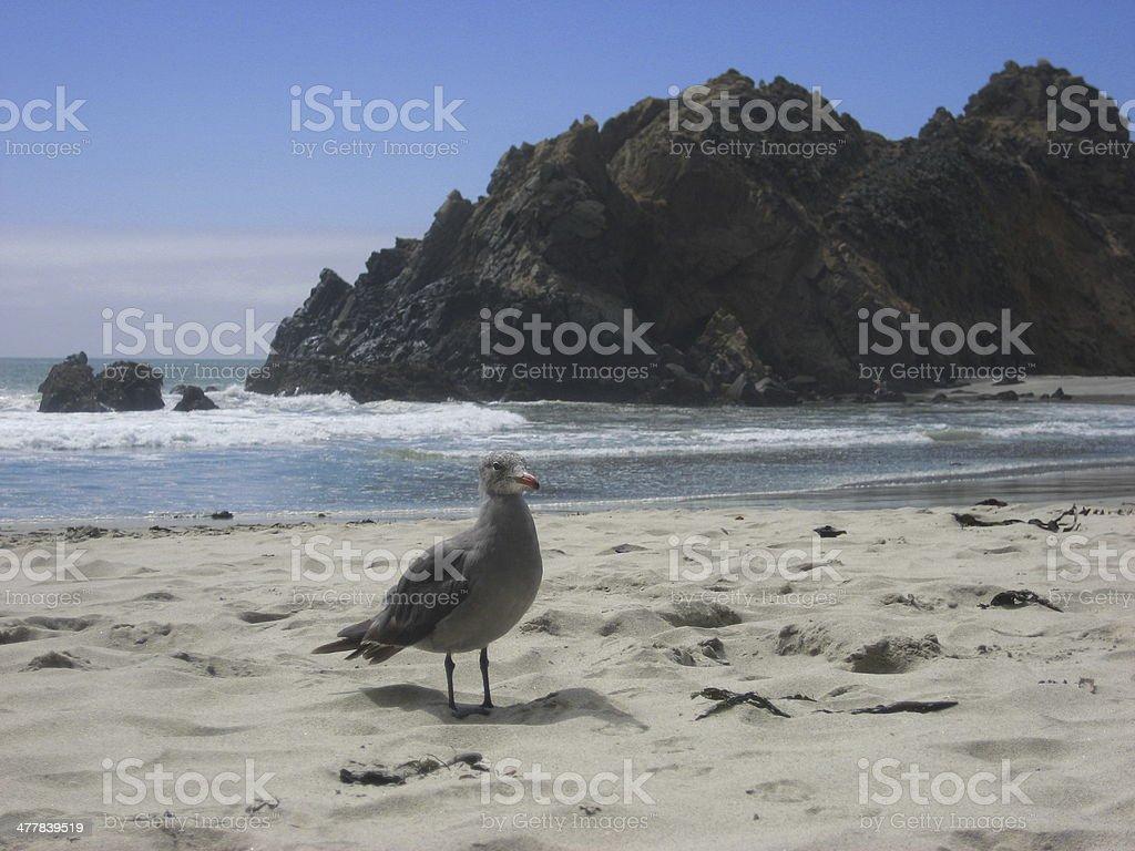 California Coastal Scene - Big Sur stock photo