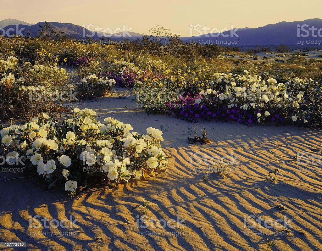 California Desert royalty-free stock photo