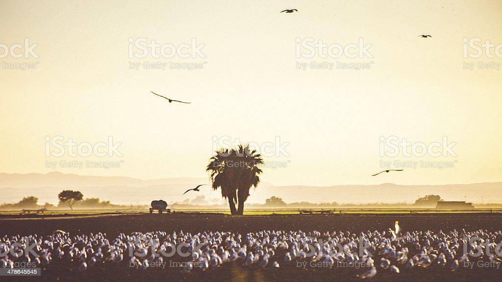 California fields. stock photo