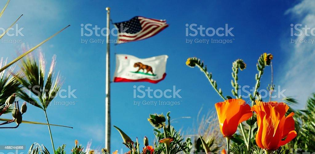California Flag and California Poppy stock photo