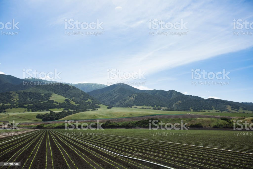 California Grown stock photo