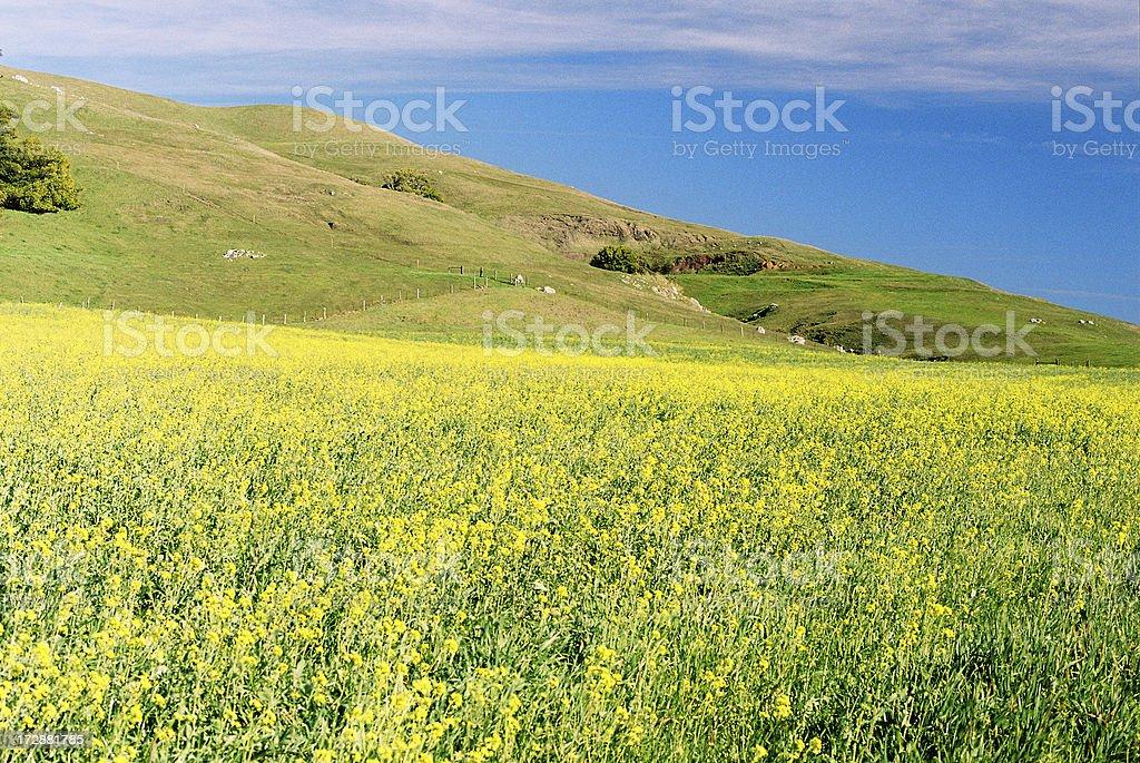California meadow in spring stock photo