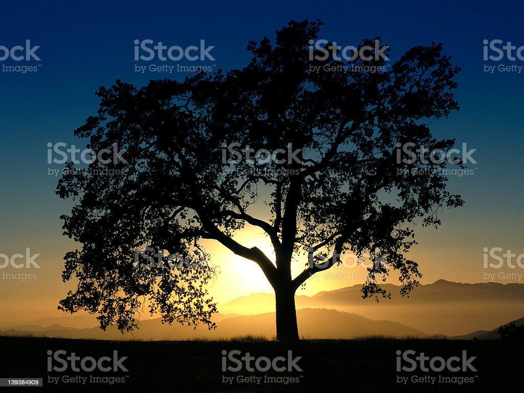 California Oak Mountain Sunset royalty-free stock photo