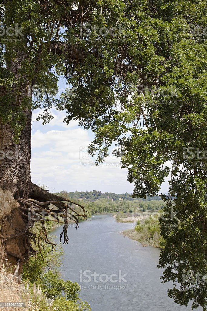 California oak tree hanging over the river stock photo