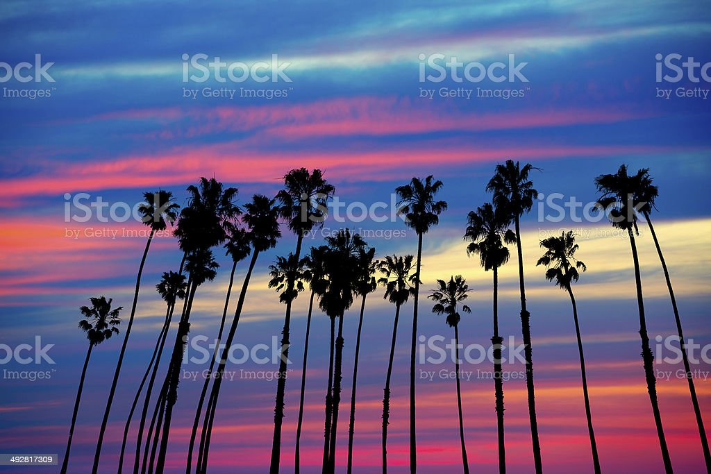 California palm trees sunset with colorful sky stock photo