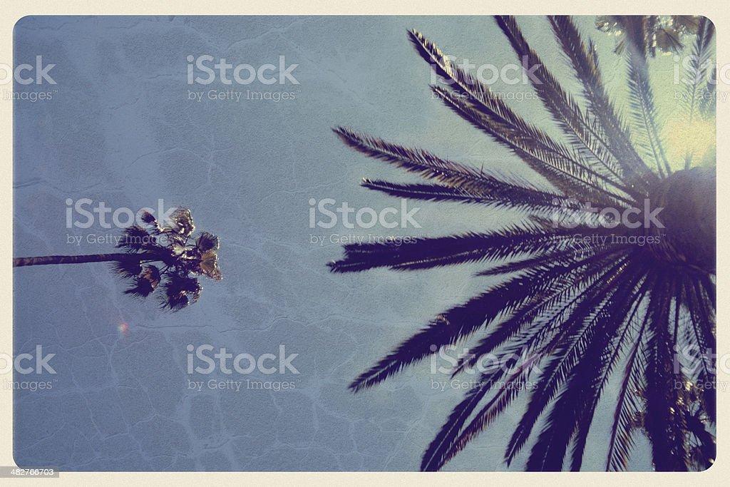 California Palm Trees - Vintage Postcard royalty-free stock photo