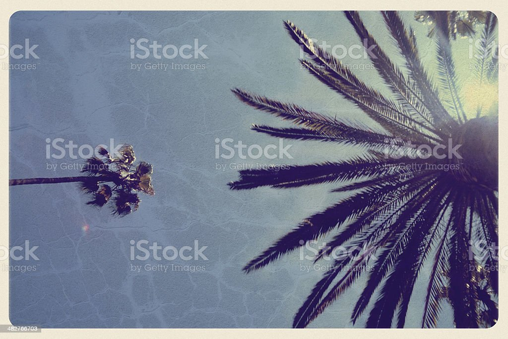 California Palm Trees - Vintage Postcard stock photo
