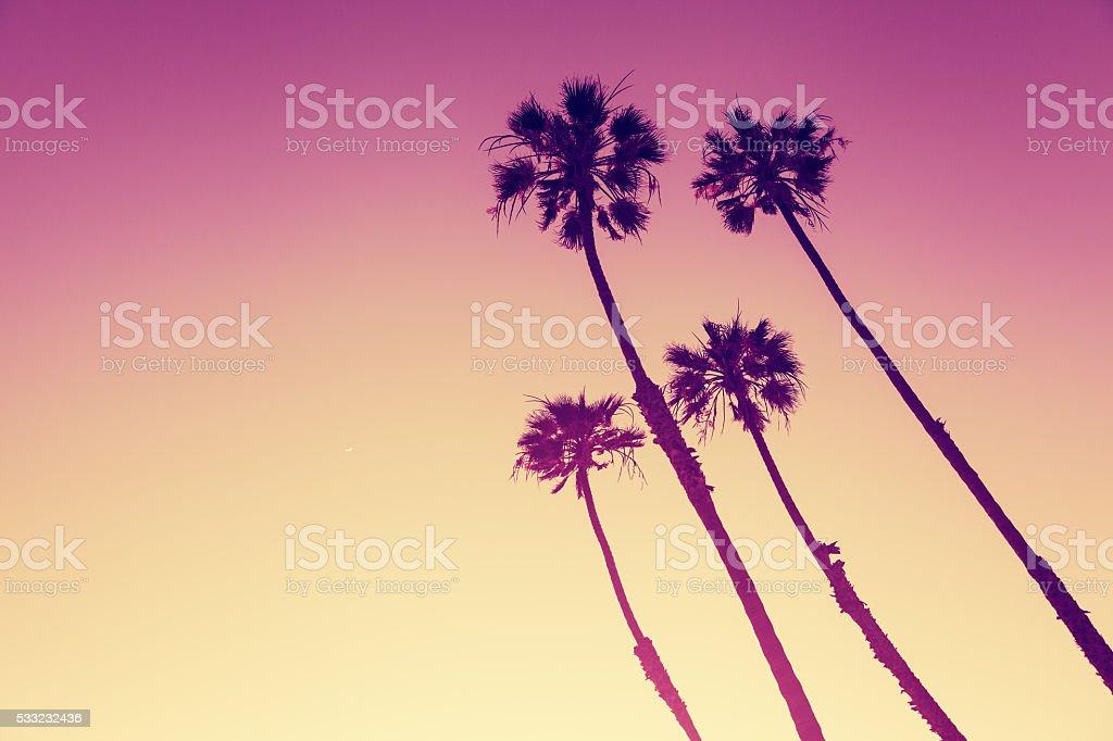 California Palms at sunset stock photo