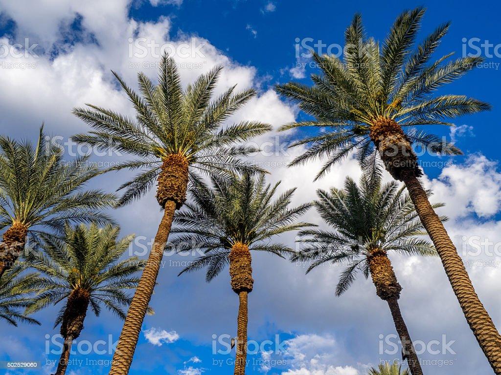 California Palms, Palm Desert golf resort stock photo