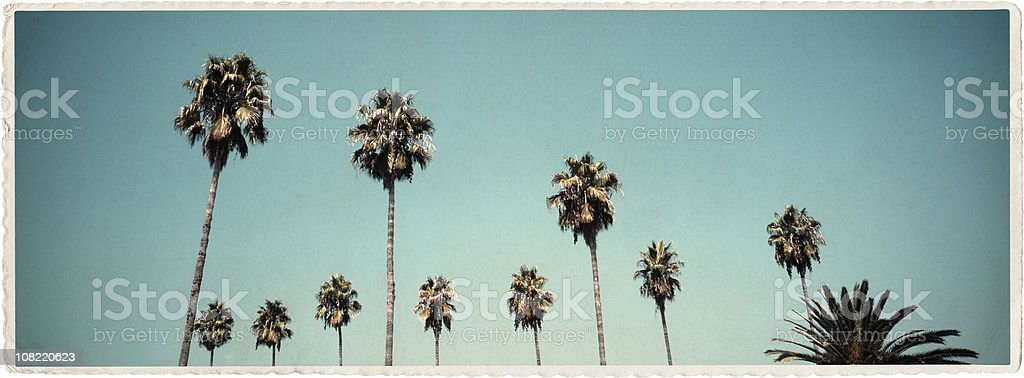 California Palms - Vintage Look Series royalty-free stock photo