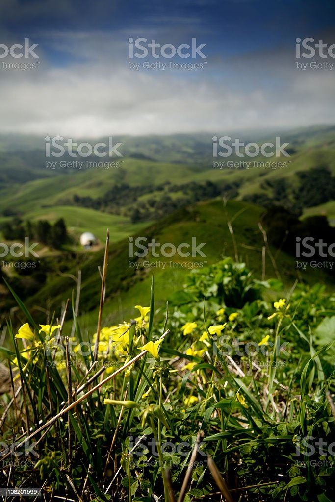California Rangeland with Wildflowers and Cloudy Blue Sky stock photo